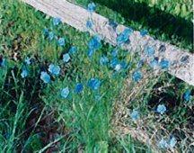 flax-appar
