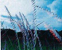 grama-sideoatspierre