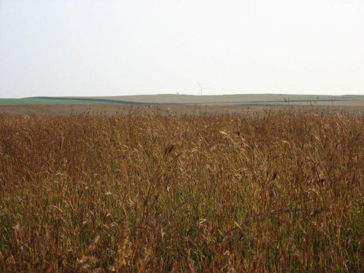 Native grasses pic