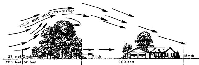 Windbreakdrawing