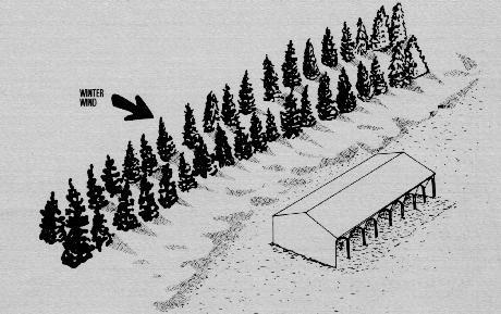 Shelterbelt for livestock